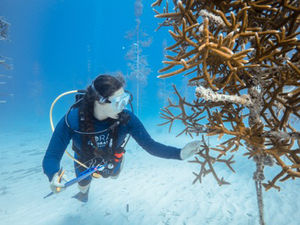 coral restoration scuba diving