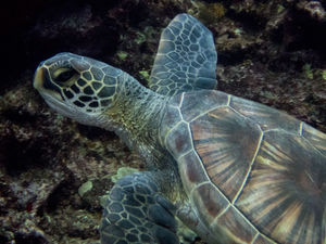 scuba diving Lanai, Hawaii