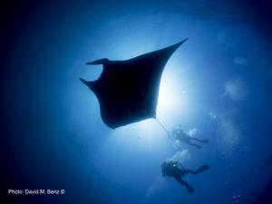 scuba diving cano island costa rica