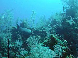belize scuba diving video