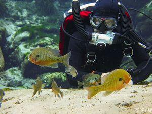 scuba diving alexander springs