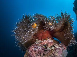 emerging scuba diving destinations