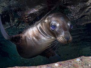 sea lion pup Mexico